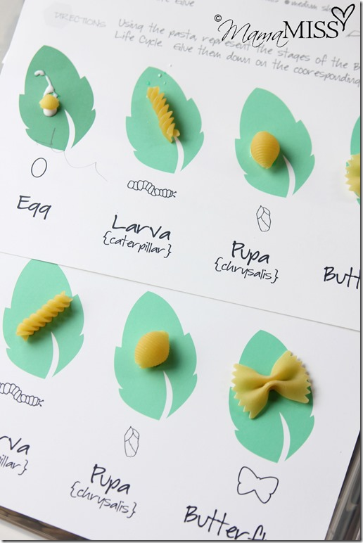 Butterfly Life Cycle Activities   Mama Miss #monarch #kidcrafts #butterfly #homeschool #preschool