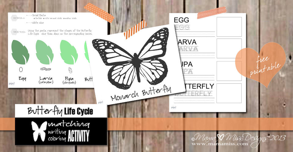 Butterfly Life Cycle Activity Mama Miss